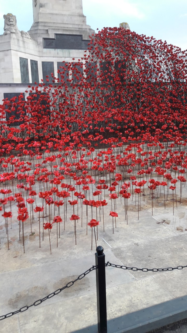 Homes, Homelessness, Poppies And Patriotism