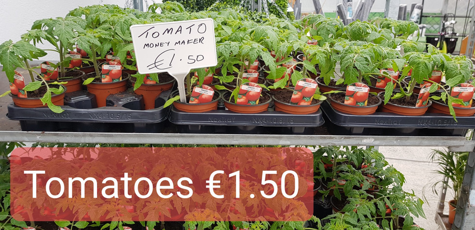 Tomato Plants €1.50
