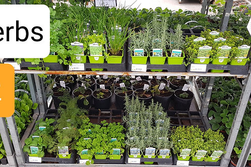Herbs in variety