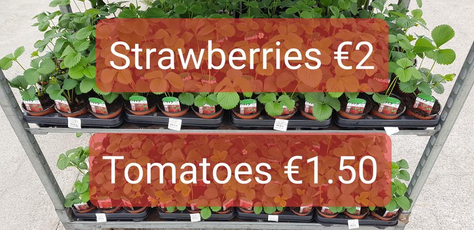 Strawberry Plants €2