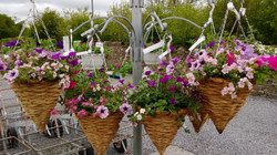 Cone baskets €24 2 for €45