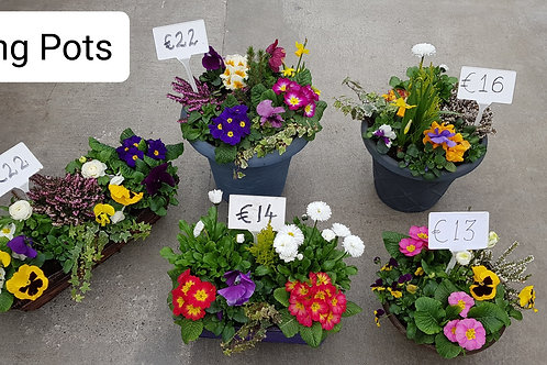 Spring Pots Priced from €13 to €22