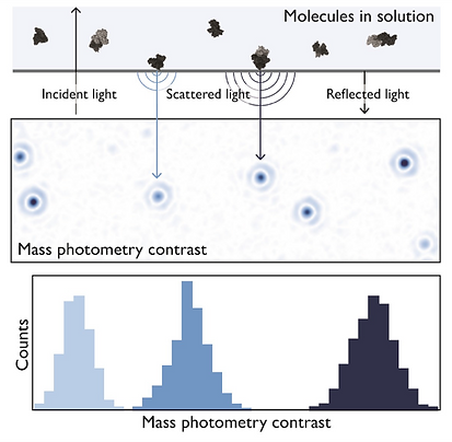 Mass-photometry-explained.png