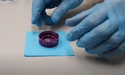 Poly-L-Lysine coating | Mass Photometry - Single molecule mass imaging