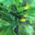 GeophileJardin_Potager-Detail01.jpg