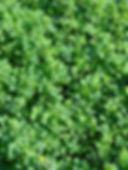 Symbiose_ProdJM_LuzerneAnnuelle.jpg
