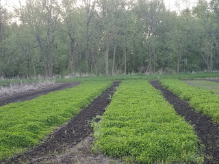 The Decline of Forage Quality