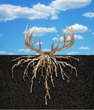 rootstorackspic