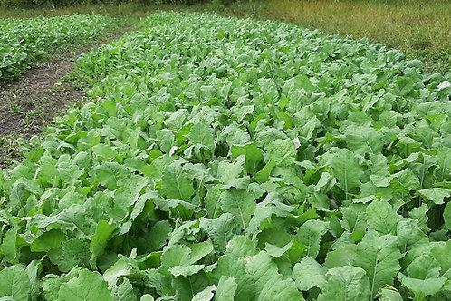 G.R.O. Forage Brassica 2.5 lbs.