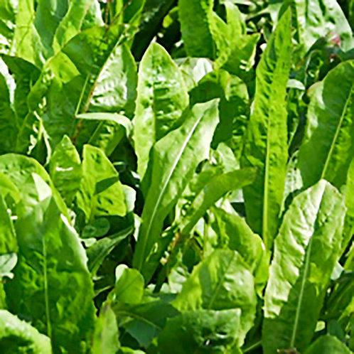 Chicory 2.5lbs.