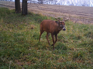 Deer Minerals as a monitoring tool