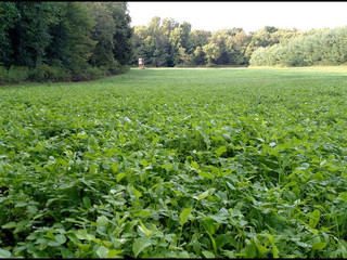 Deer Minerals vs sound soil and forage programs