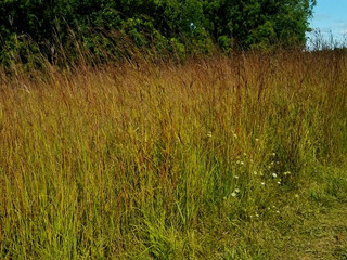 Warm Season Native Grasses