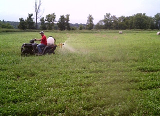10 Steps to Making Your Food Plots More Attractive to Deer