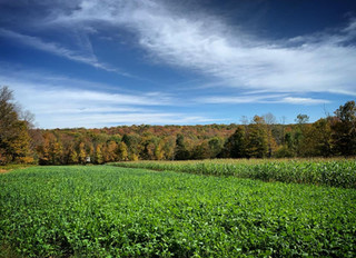 10 steps to a successful food plot