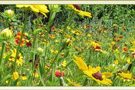 Pollinator CP42 1 acre
