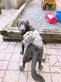 Charcoal puppy with his gray Easter egge