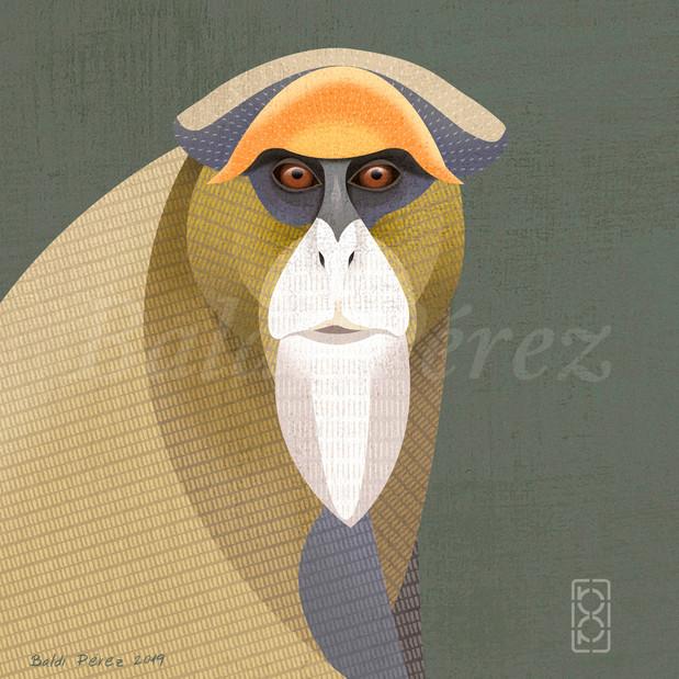 Mono de brazza