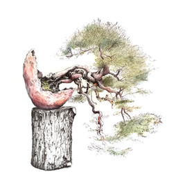 Juniperus sabina | sabina rastrera