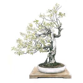Prunus mume | Albaricoquero japonés de flor