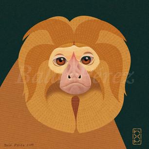 Mono león dorado
