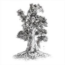 Pino negro. Pinus uncinata