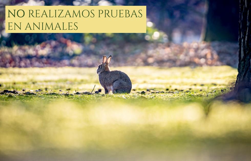 NO REALIZAMOS PRUEBAS EN ANIMALES.png