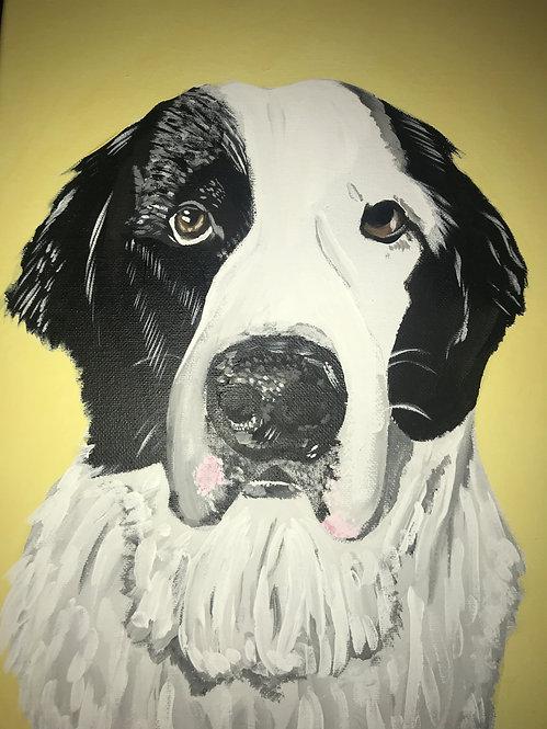 Pet Portraits Commissions