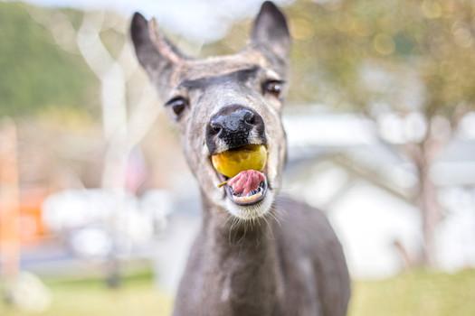 A Deer Friend