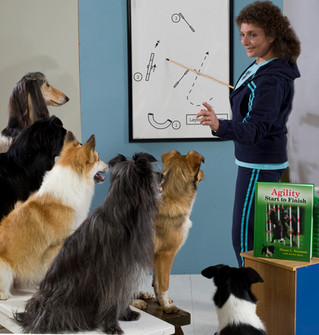 How do I find a talented, reputable, knowledgeable dog trainer?