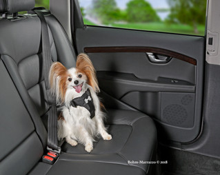 Does your dog get Car Sick?