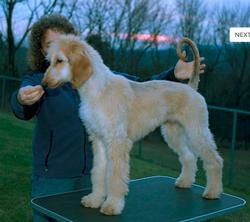 Reine puppy