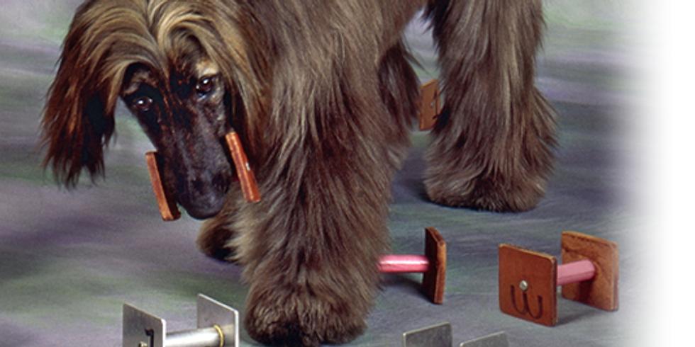 Go Beyond Basic Dog Training Obedience Seminar