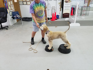 How Do You Become a Dog Trainer?