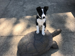 taiter standing on turtle