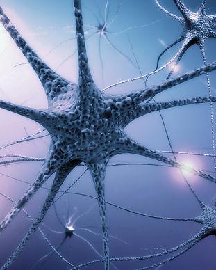 Human Nervous System.jpg