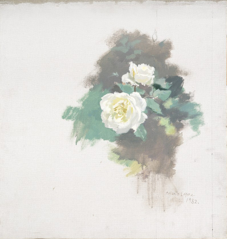 Rosas blancas, 1982