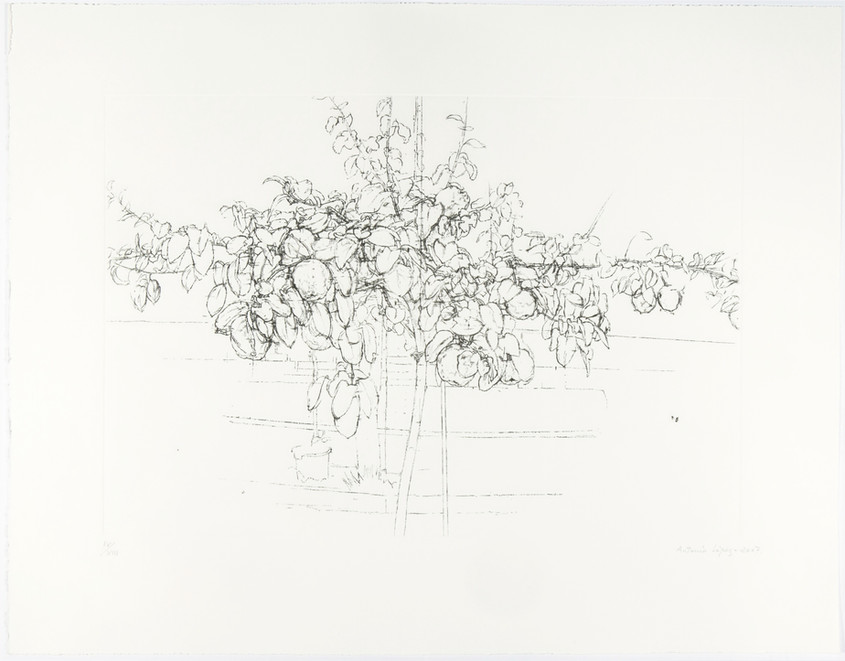Fruit Tree, 2007, Etching, aquatint and drypoint on copper plate, 330 gr Somerset Radiant White paper. Edition of 100 copies. Plate mark: 38 x 55 cm. Paper: 56 x 72 cm
