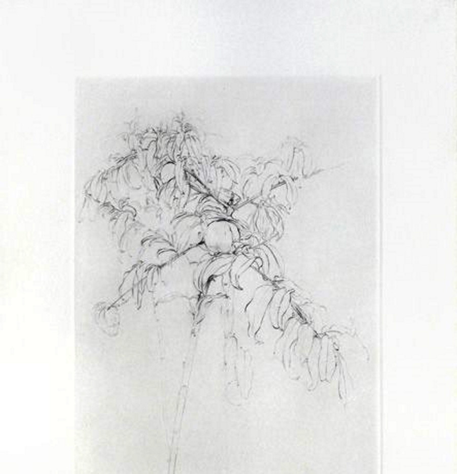 Melocotonero 2001, engraving