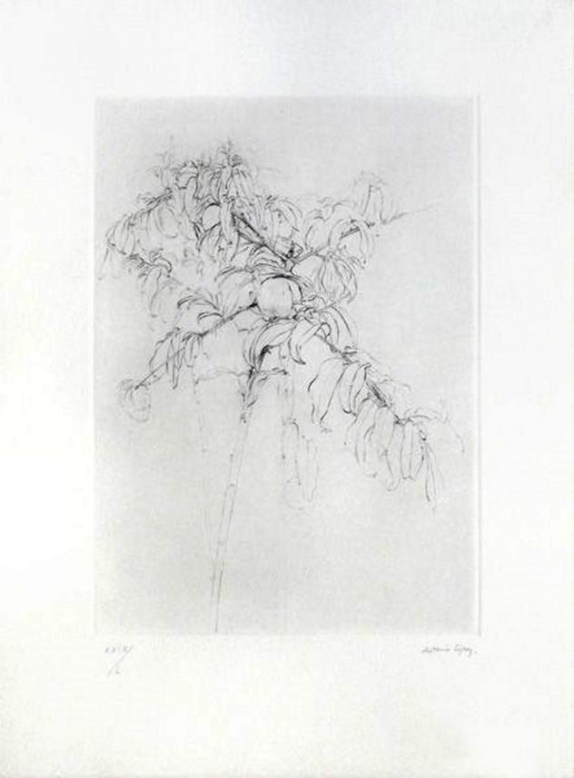 Melocotonero 2001, grabado, punta seca en plancha de zinc cromada en papel BFK Rives. Tirada de 120; Tirada de 50 en numeración romana; Huella: 38 x 27 cm; Papel: 55 x 40 cm.