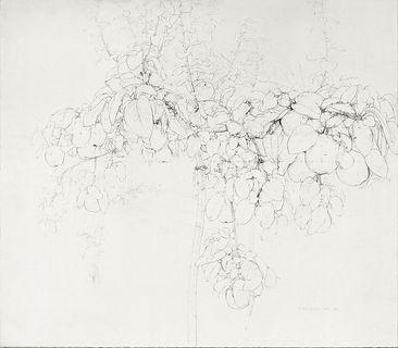 Dibujo de Árbol del membrillo de Antonio López durante el rodaje de El sol de membrillo
