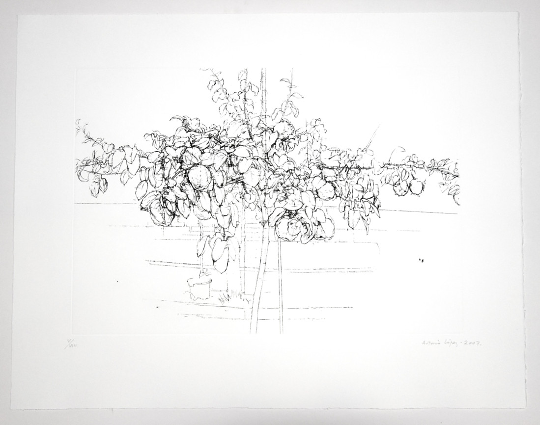 Fruit tree, 2007, Etching, aquatint and drypoint on copper plate, Somerset Radiant White. Edition of 100 copies. Plate Mark: 38 x 55 cm; Paper: 56 x 72 cm.