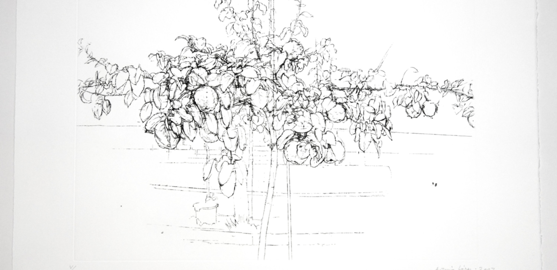 ÁRBOL FRUTAL, 2007, Etching, aquatint and drypoint on copper plate