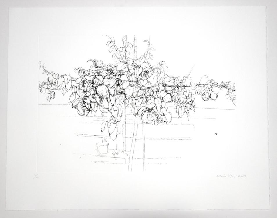 Árbol frutal, 2007, aguafuerte, aguatinta y punta seca sobre plancha de cobre, papel: Somerset Radiant White. Tirada de 100 ejemplares. Huella: 38 x 55 cm; Papel: 56 x 72 cm.