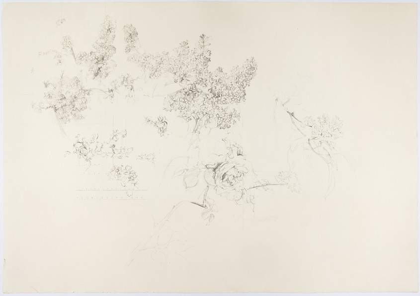 Group of Flowers, 1992, Lithograph, Velin d'Arches Paper 270 gr. Edition of 250 copies. Paper / Plate mark: 62.5 x 89.5 cm