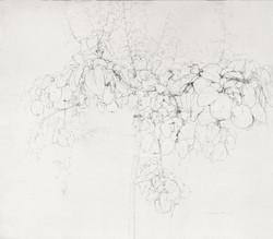 Árbol de membrillo, 1990