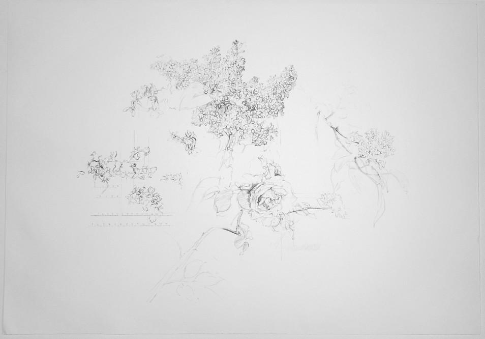 Grupos de flores, 1992, litografía, papel Velin d'Arches 270 gr. Tirada de 250 ejemplares. Papel/Huella: 62,5 x 89,5 cm.