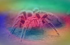 spider-2740997_960_720_edited_edited_edi