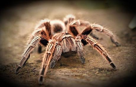 spider-2740997_960_720_edited_edited.jpg