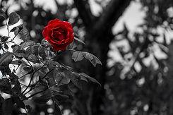 black-white-2305547_960_720.jpg